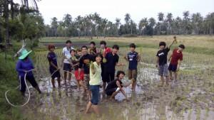 Planting rice in Ko Sukorn